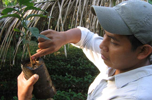 A coffee farmer inspects a coffee seedling.