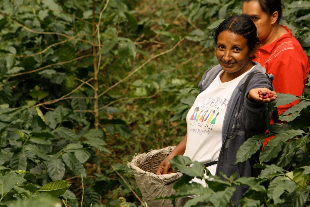 Julia Salinas Harvesting Coffee